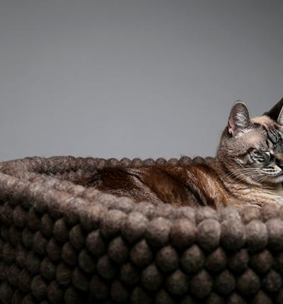 Tilde Felt Cat Bed